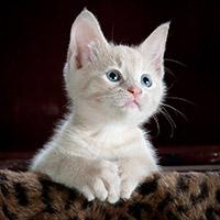 help_example/help/kitten01_200_200.jpg